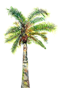 """""""Canary Island Date Palm"""", Watercolour and ink on paper, 40 x 30 CM, 2018."""